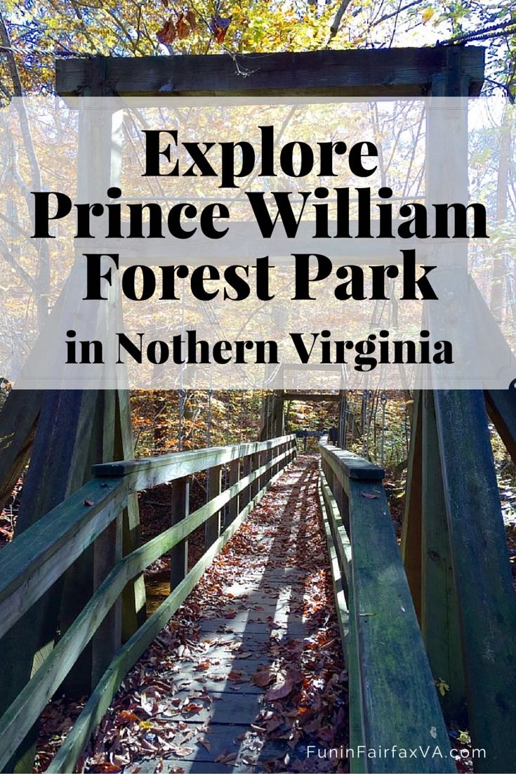 Explore Prince William Forest in Northern Virginia from 37 miles of hiking trails and a scenic loop drive full of beautiful nature and interesting history.