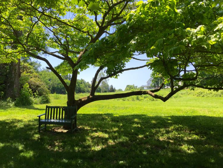 Peaceful bench River Farm