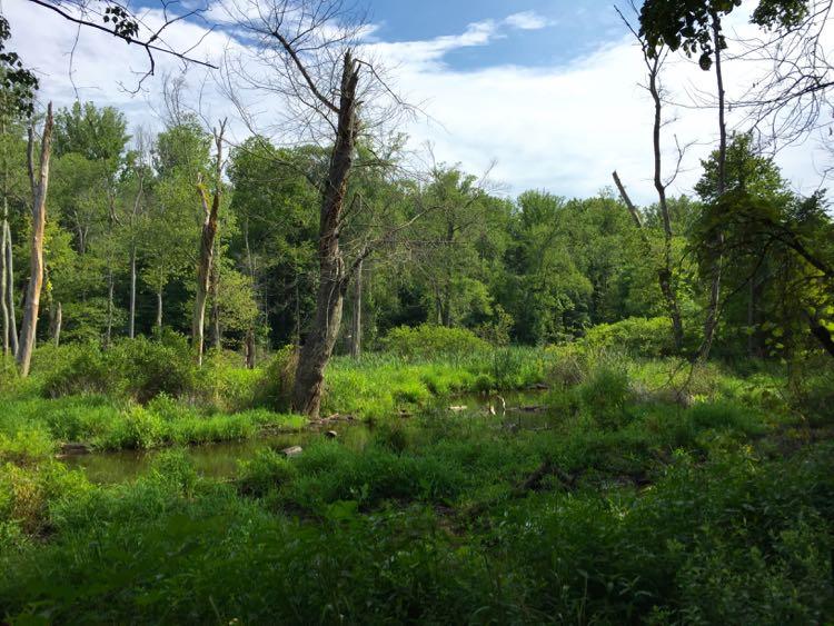 Glade Stream Valley Reston