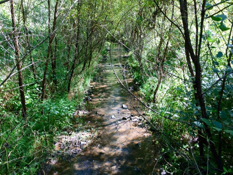 Glade stream from bridge Reston Virginia