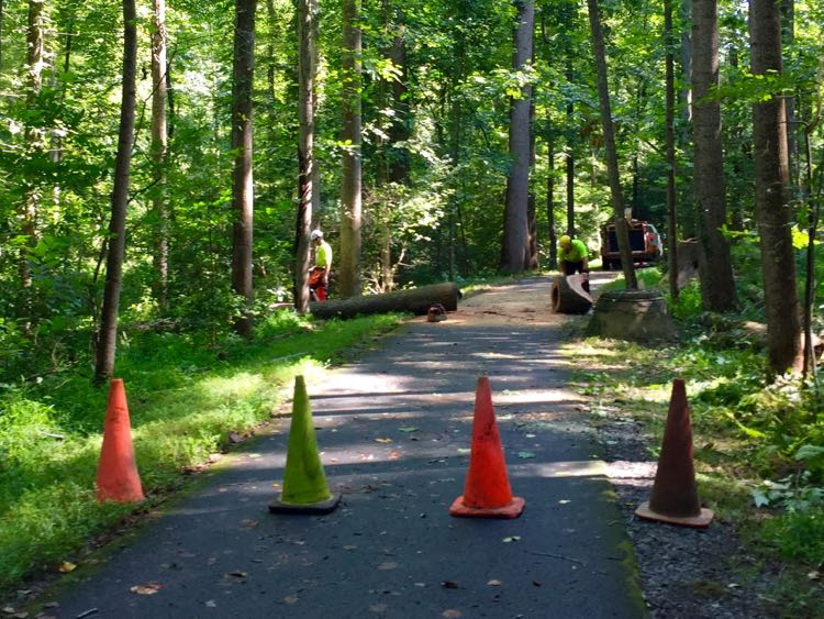 Glade trail is well maintained, Reston Virginia