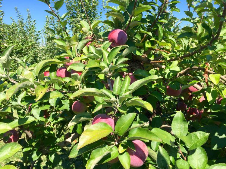 Gettysburg Foodie Getaway to Pennsylvania Apple Country