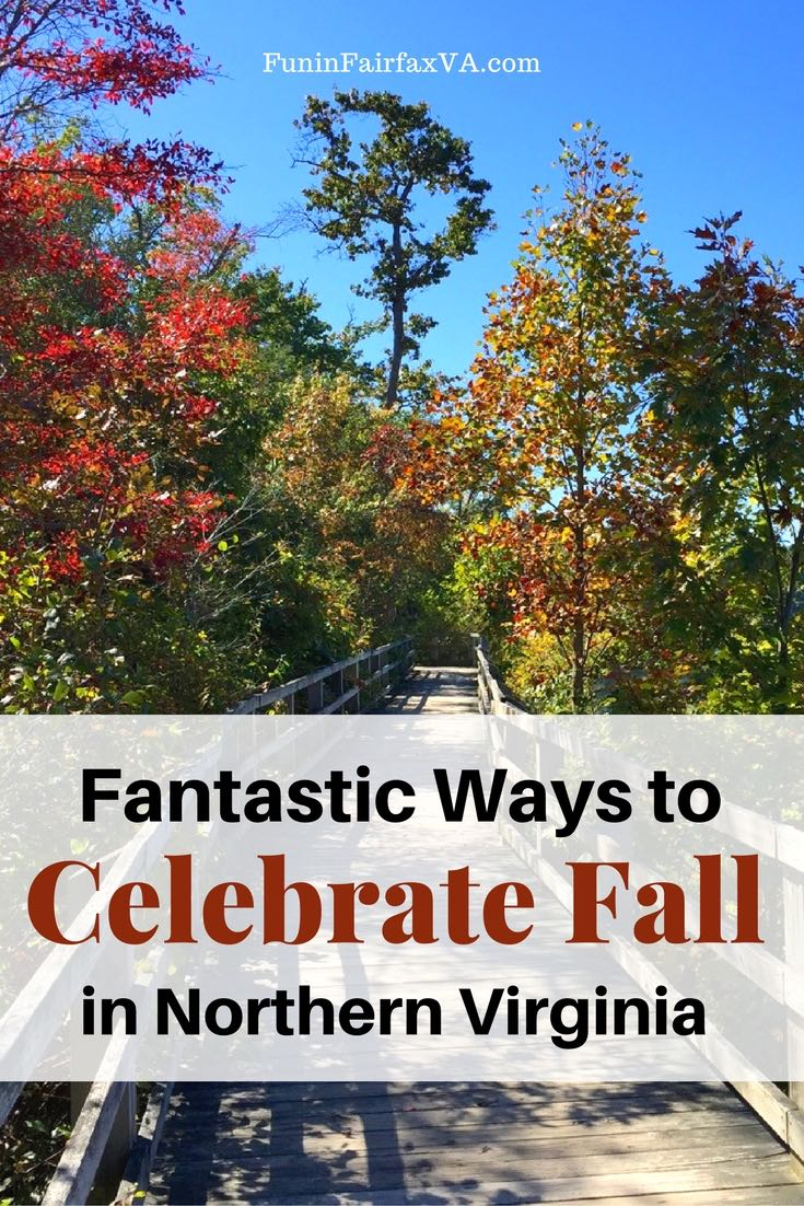 Celebrate fall in Northern Virginia with festivals, destinations, and activities suggested by local experts and featuring Autumn foliage and fun.
