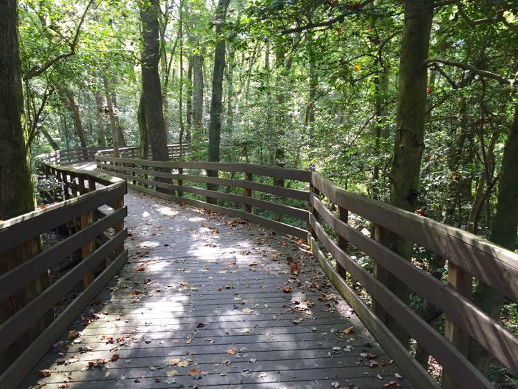 Bob Trail Trap Pond SP Delaware