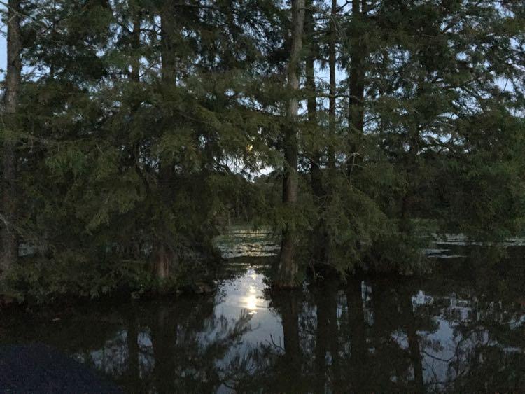 Evening float Trap Pond SP Southern Delaware