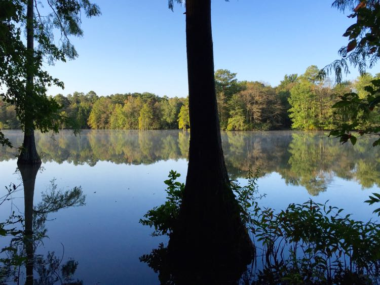 Morning on Trap Pond SP Southern Delaware