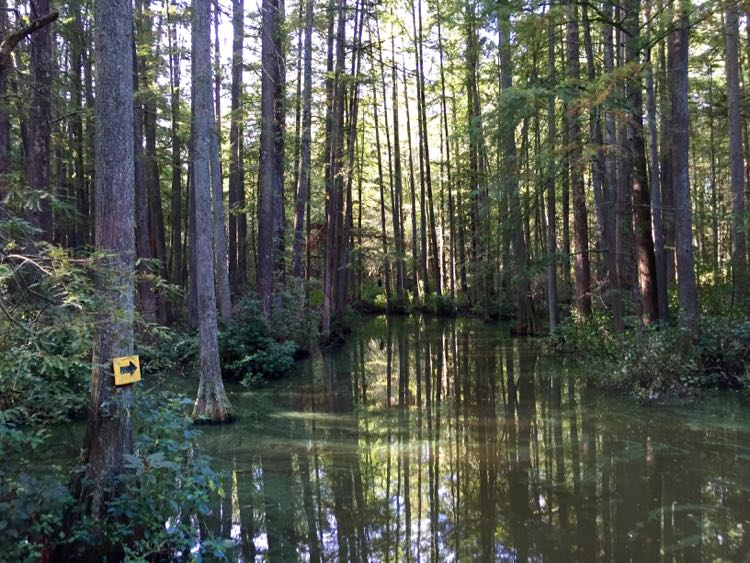 Paddling trail Trap Pond SP Delaware
