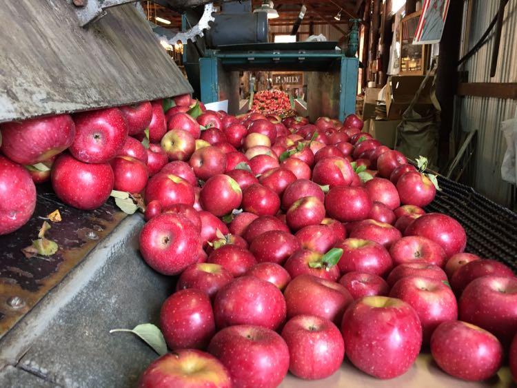 Richards Fruit Market apples Shenandoah Valley north