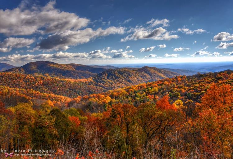 Shenandoah National Park Foliage photo by Jen Johnson