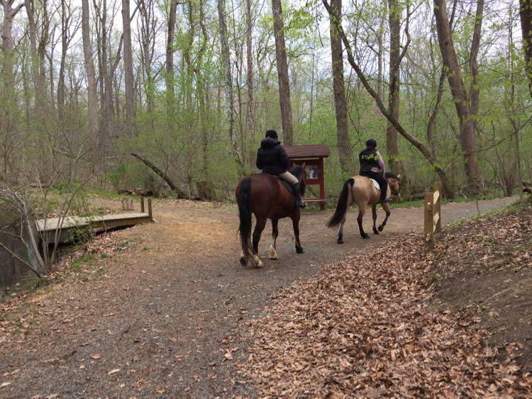 Horses at Riverbend Park