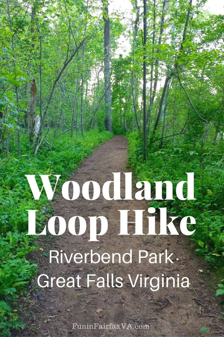 This woodland loop hike follows shady dirt paths to the Potomac River, through hollows and forest at Riverbend Regional Park in Great Falls, Virginia.