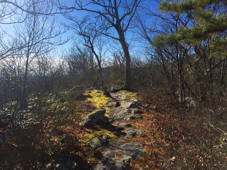 Tibbet Knob Trail Virginia