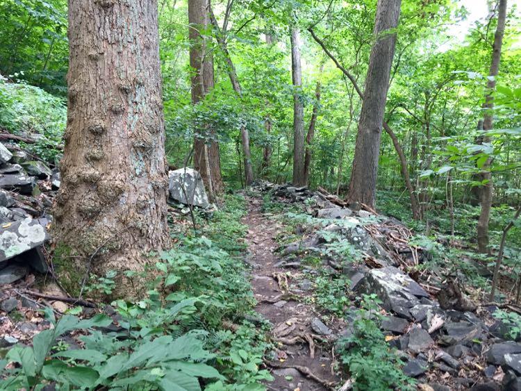 Potomac Heritage Trail Dead Run waterfall hike
