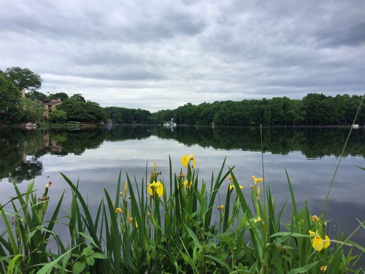 Summer flowers Lake Thoreau Reston VA