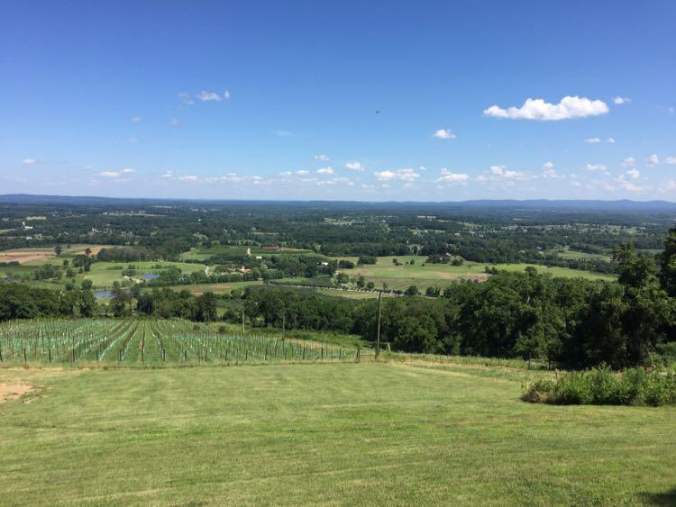 Summer view from Dirt Farm Brewing