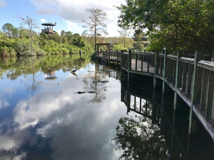 Gatorland in Kissimmee Florida