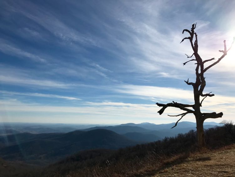 That Shenandoah tree, Shenandoah National Park Virginia
