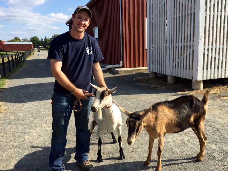 Goats at Frying Pan Park Northern Virginia
