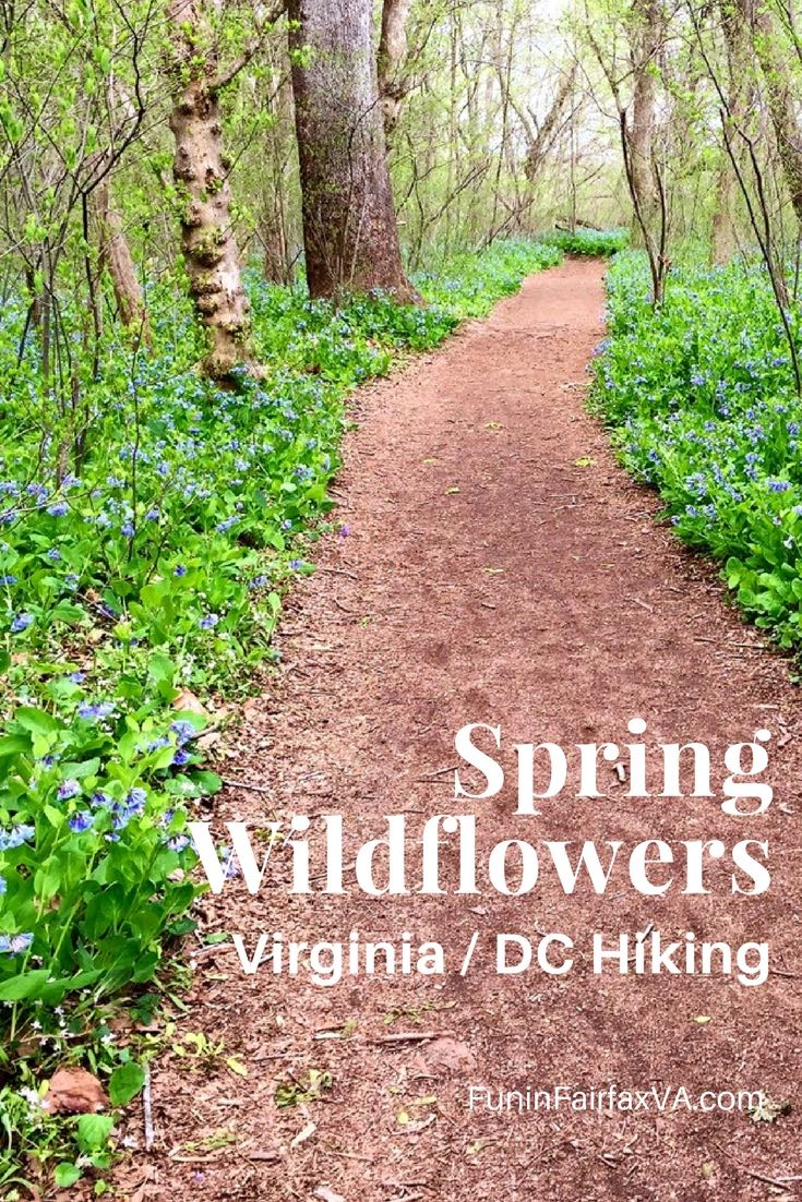 Spring Wildflowers and where to find them in the Northern Virginia and Washington DC area.