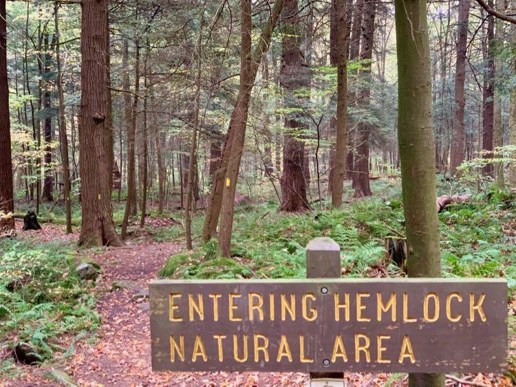 Hike the Hemlock Trail Laurel Hill State Park PA