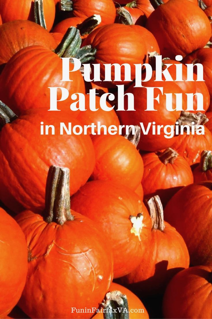 Fall festivals and pumpkin patches in Northern VA for family fun near Washington DC.