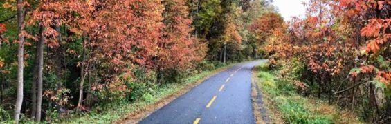 Fall on Washington and Old Dominion Trail Reston