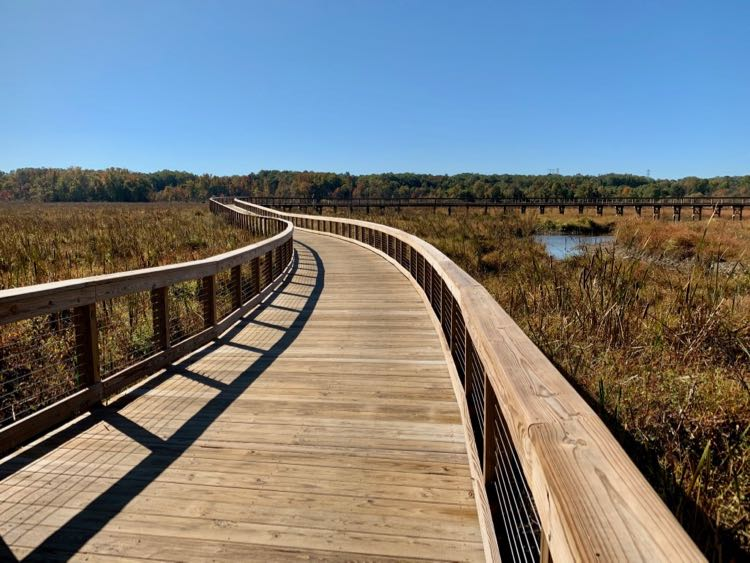 Neabsco Creek Boardwalk Trail winds over the wetlands in Prince William County Virginia