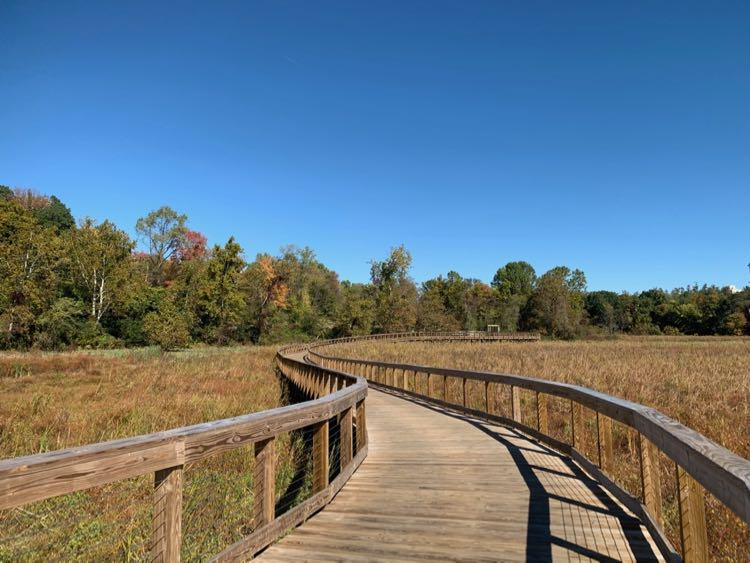 North end of Neabsco Creek Boardwalk Trail in Northern Virginia