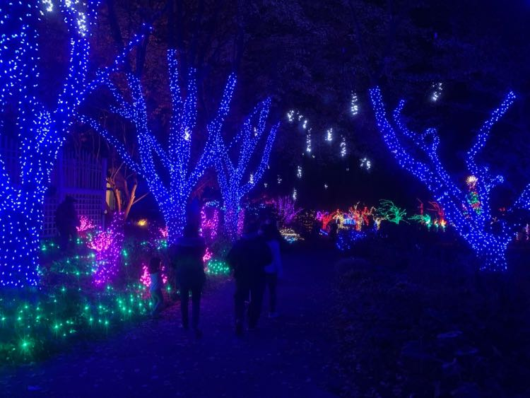 Meadowlark Gardens Winter Walk of Lights path