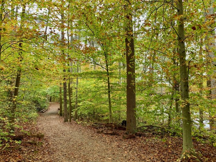 Burke Lake trail during fall foliage season