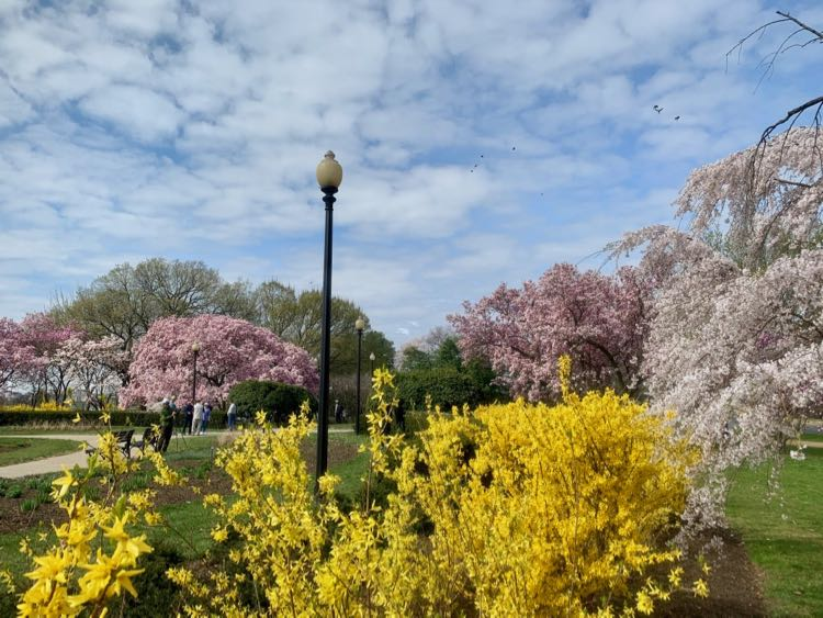 DC in bloom at the George Mason Memorial