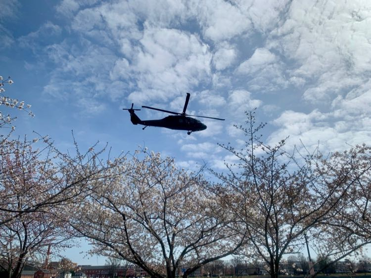 Helicopter flying over East Potomac cherry blossoms