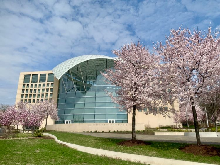 Cherry trees at the United States Institute of Peace