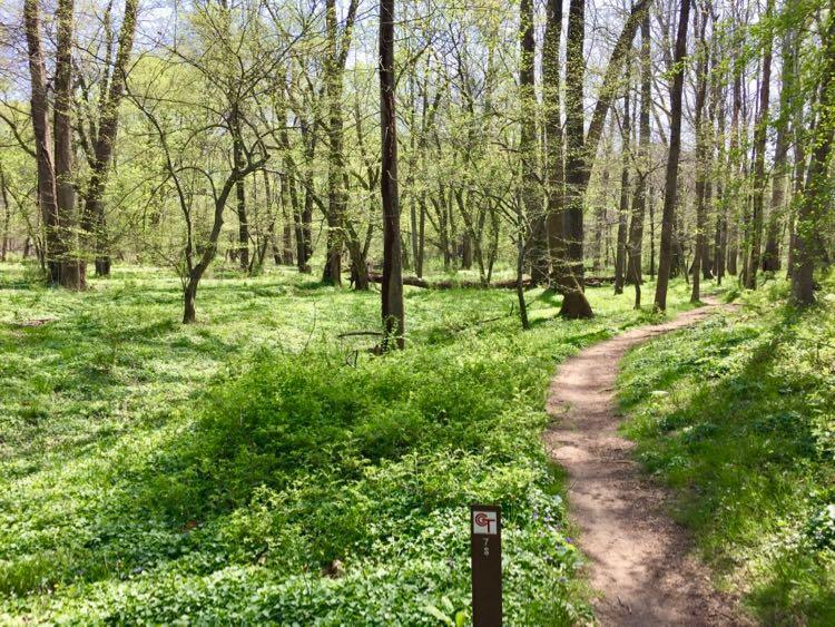 Fairfax CCT segment 8 hike