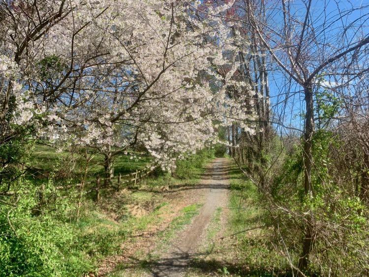 W&OD bridle trail CCT segment 8
