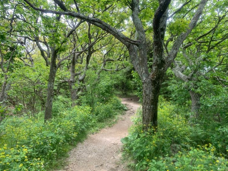 Stony Man Trail Shenandoah NP