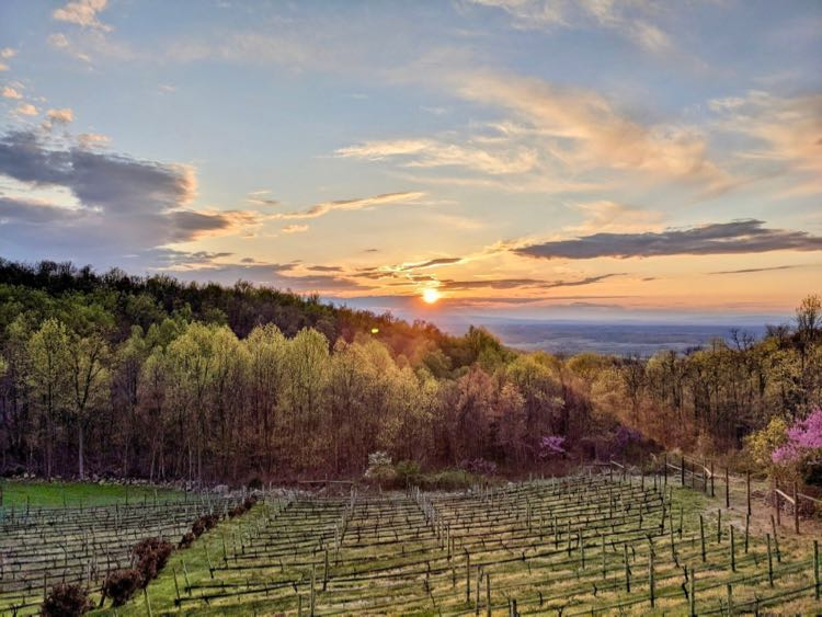 Twin Oaks Tavern Winery sunset by Jaclyn Kuzmitsky
