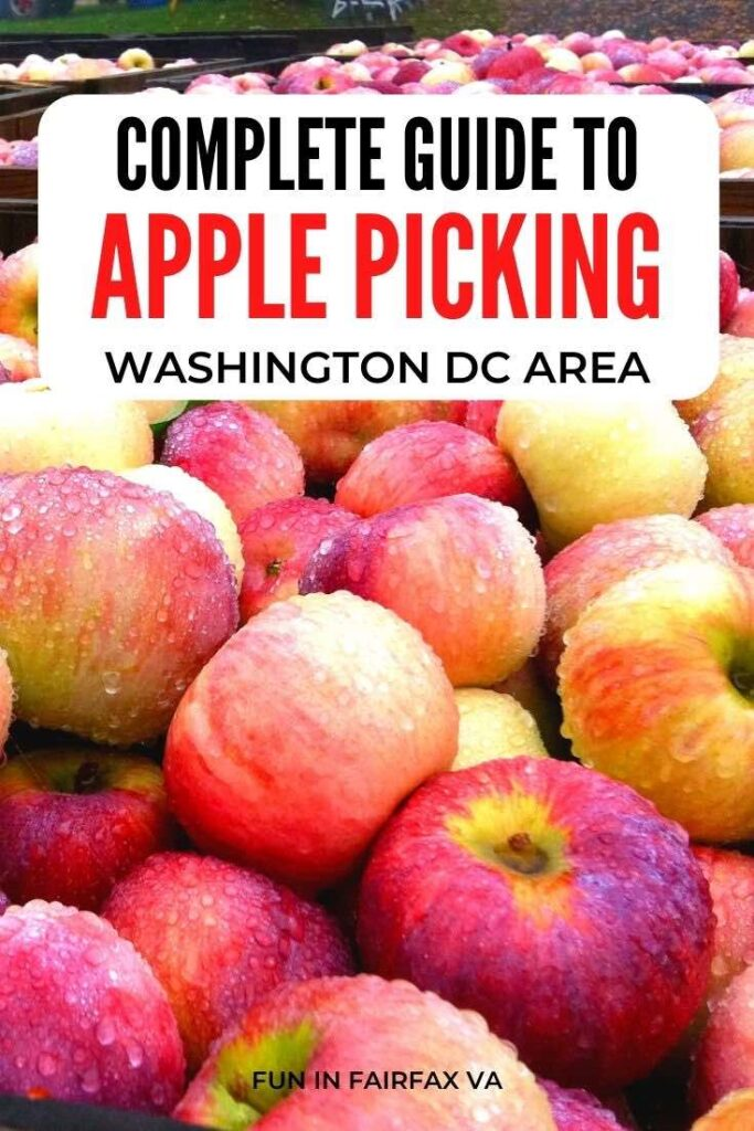 Complete guide to apple picking in Virginia and festival fun at beautiful apple orchards, perfect for a day trip from Washington DC.