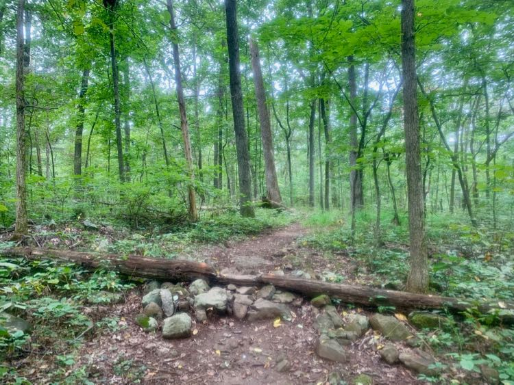 Bike feature on the Blue Trail
