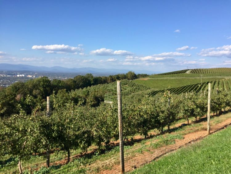 Carter Mountain Orchard has some of the best apple picking in Virginia and a gorgeous view