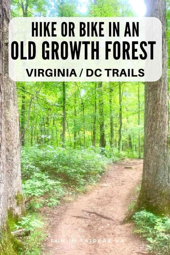 Explore shady trails on an easy hike through old-growth hardwoods and pine near the Manassas Battlefield in Northern Virginia.