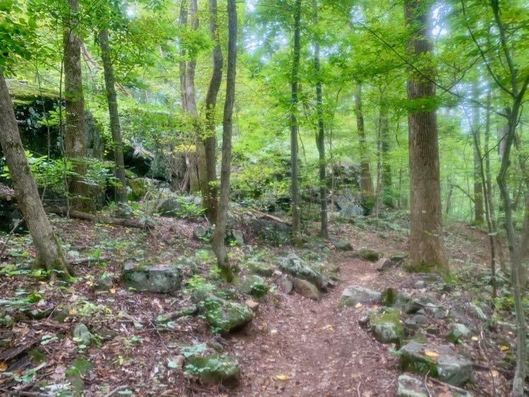 Orange Trail Robinson Forest hike
