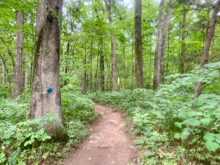 Conway Robinson Forest hike Blue Trail