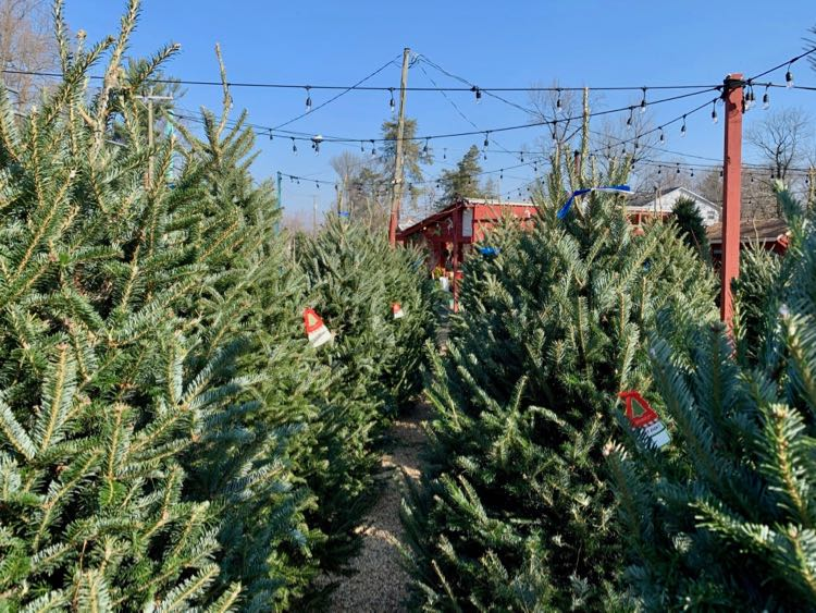 Christmas tree market in Northern Virginia