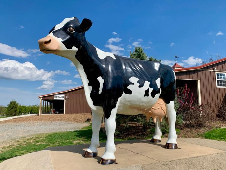 Cow statue at the entrance to Great Country Farms