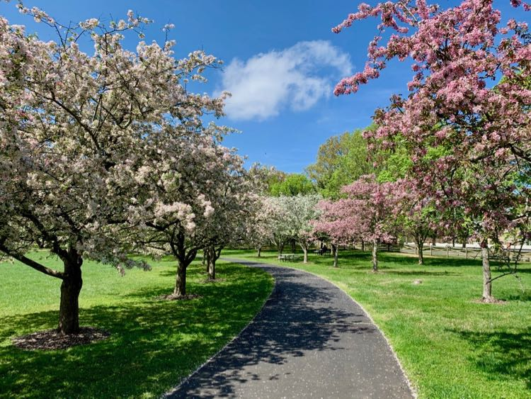 Meadowlark Gardens outer path lined with apple blossoms