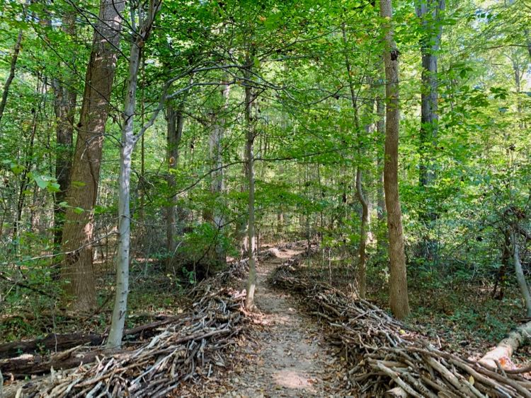 The trailhead to Seneca Park, lined with woven branches, leads to excellent woodland hiking in Northern Virginia