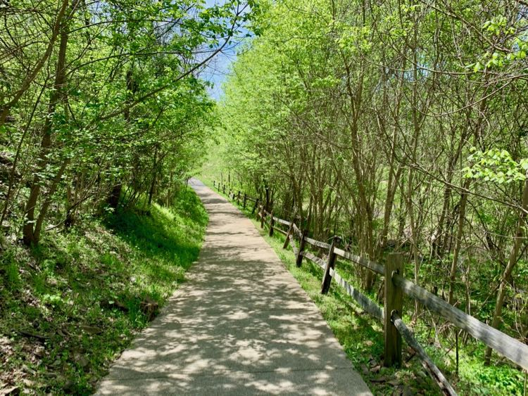 Tree lined trail at Cool Spring