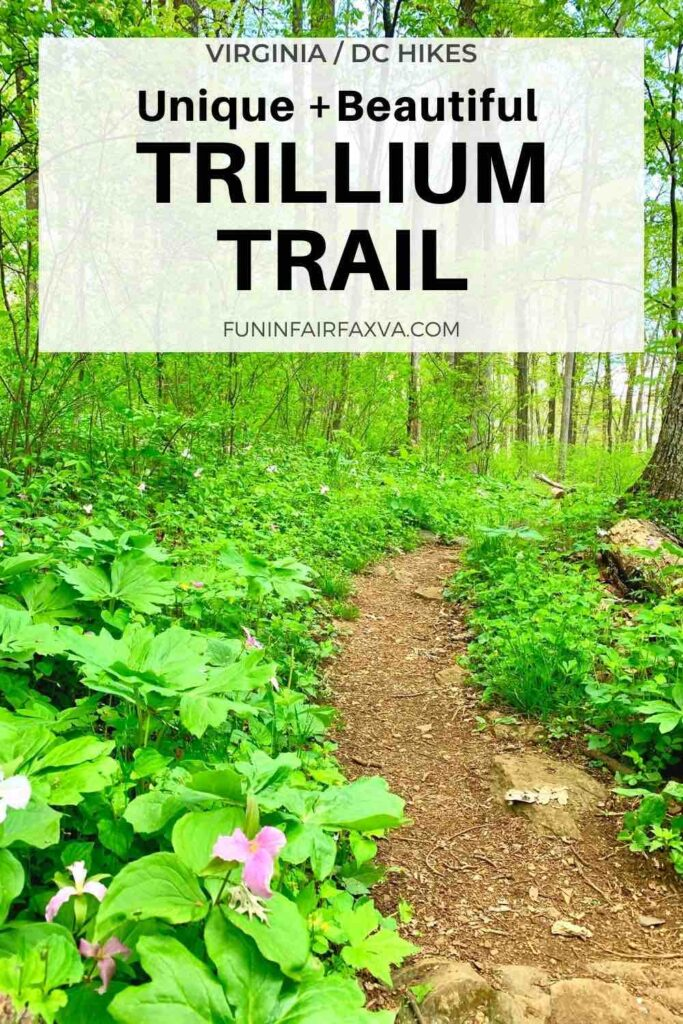 See the largest stand of large-flowered trillium in Virginia on an easy hike for nature-lovers.