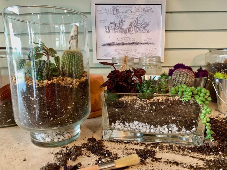Balanced Roots DIY Terrarium at Massanutten Resort VA